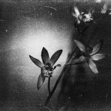 Analogico 35mm