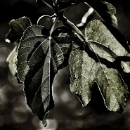 Sequence X - Foliage