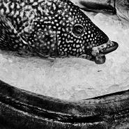 Sequence XV - Natura morta Fish