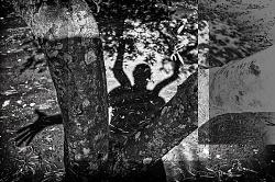 Nel giardino degli ulivi